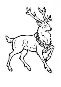 Благородный олень с бубенцами Раскраски зимушка зима
