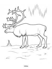 Олень на северном полюсе Раскраски зимушка зима