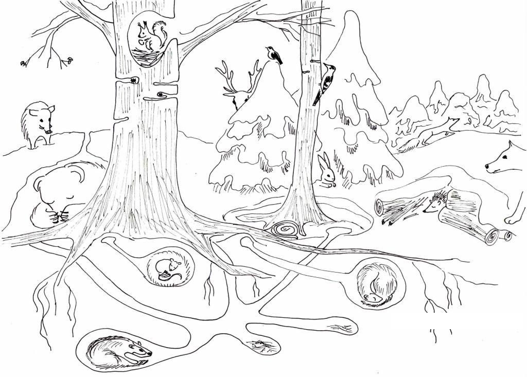 Раскраска зайца в лесу