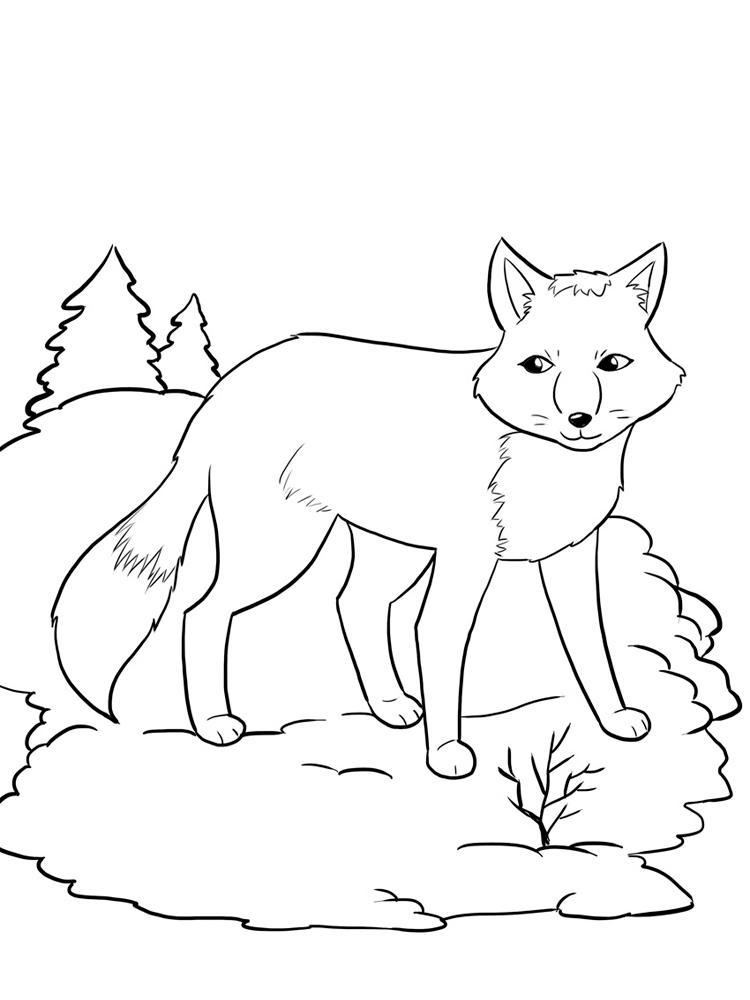 Лиса на снегу Раскраска зима