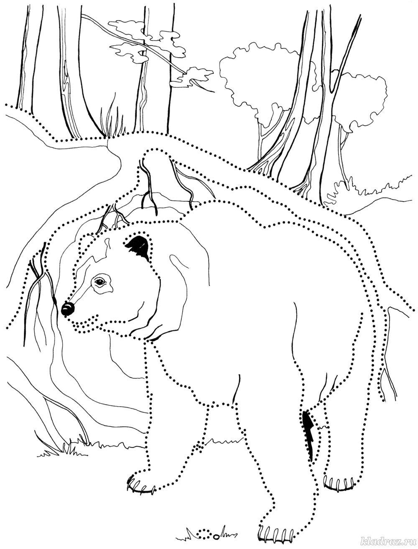 Медведь Раскраски про зиму для детей