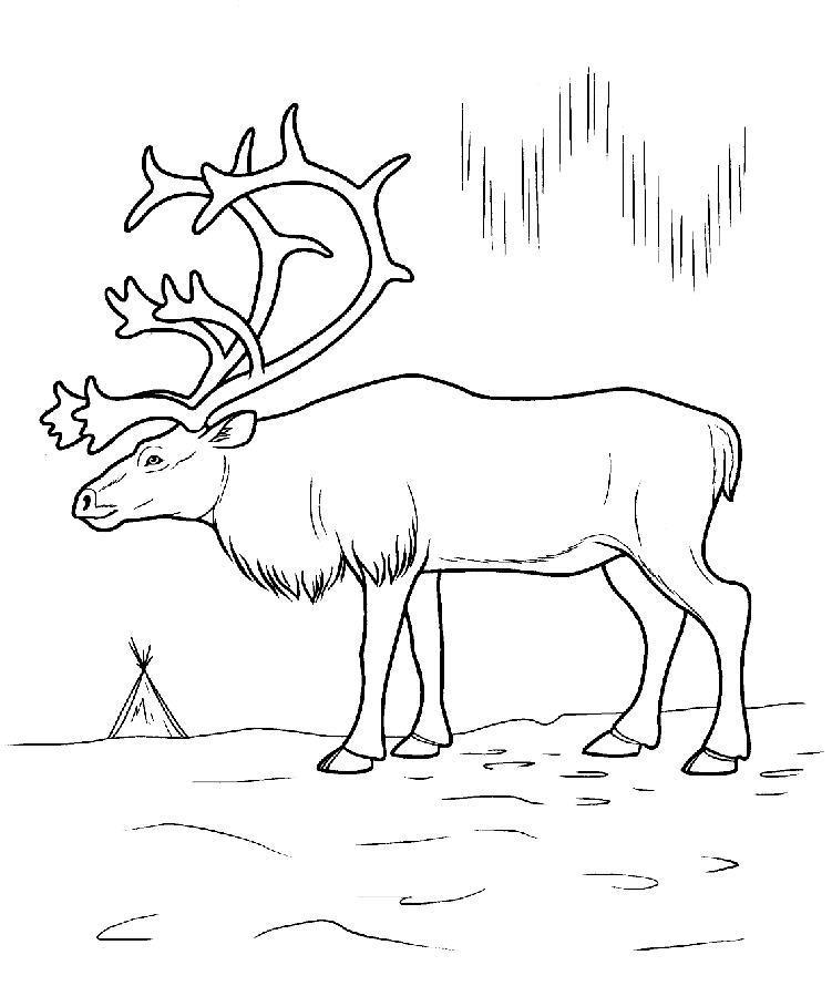 Северный олень на льду, северное сияние Раскраска зима пришла