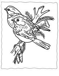 Птицы на ветке сосны Детские раскраски зима распечатать