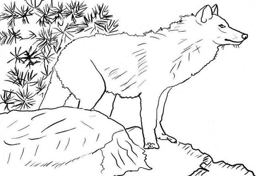 Распечатать Раскраска волк в клетке
