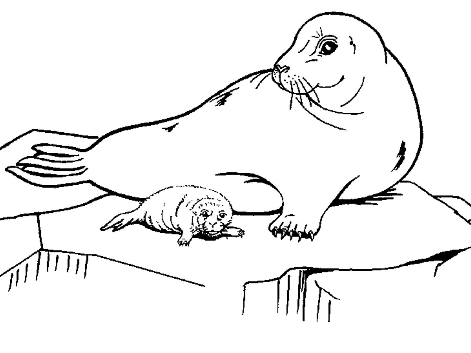 Раскраски для детей тюлень