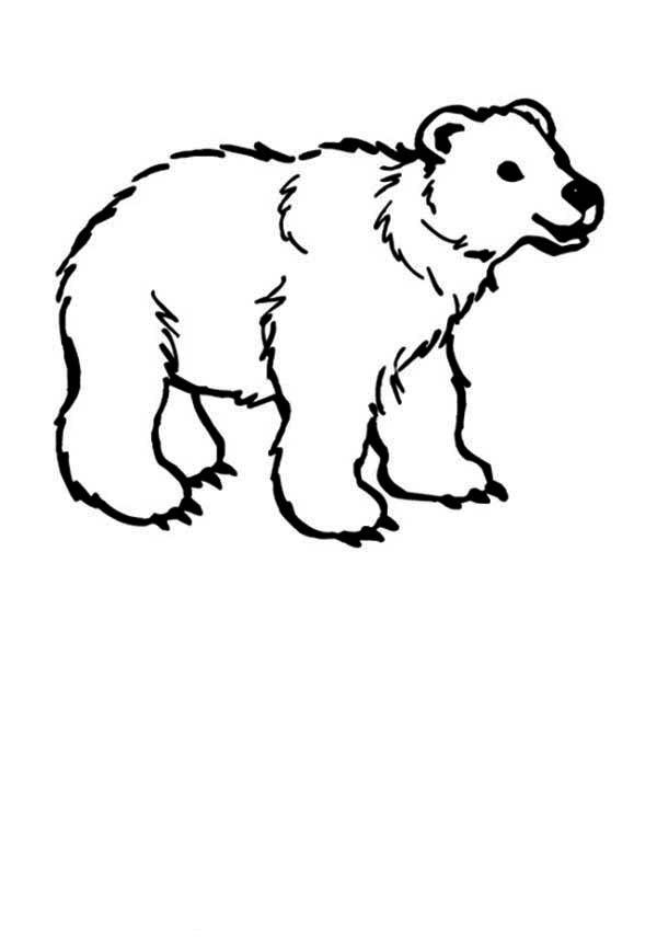Полярный медвежонок Раскраски зима скачать бесплатно