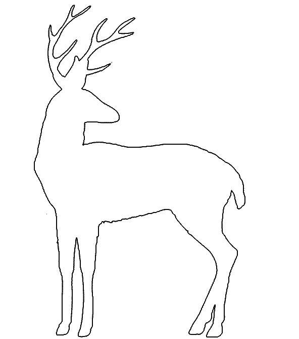Картинка Раскраска Северного Оленя - booksdigest