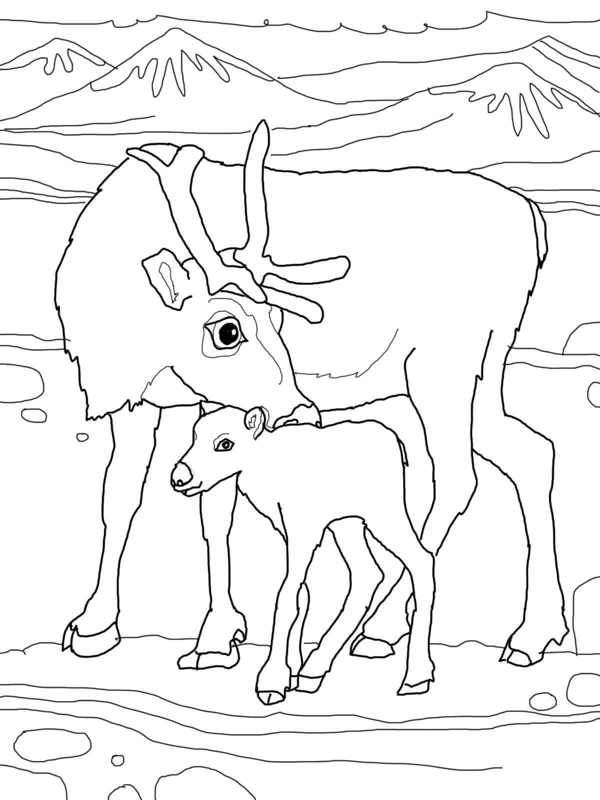 Северный олень с олененком Зимние раскраски для малышей