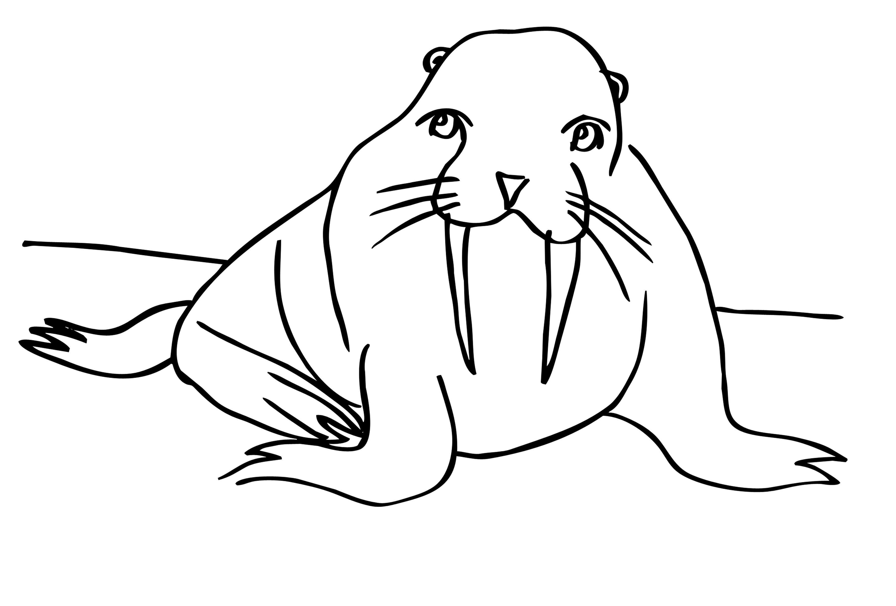 Северный тюлень Зимние раскраски для малышей