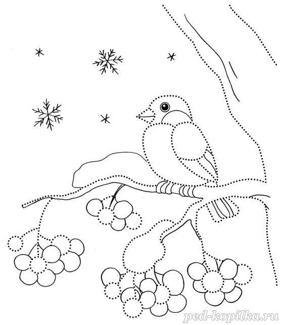 Снегирь на ветке Зимние рисунки раскраски