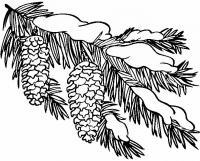 Ветка с шишками Раскраска зима