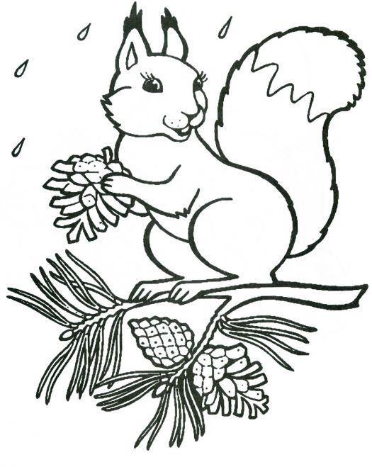 Белочка с шишками Зимние раскраски для девочек