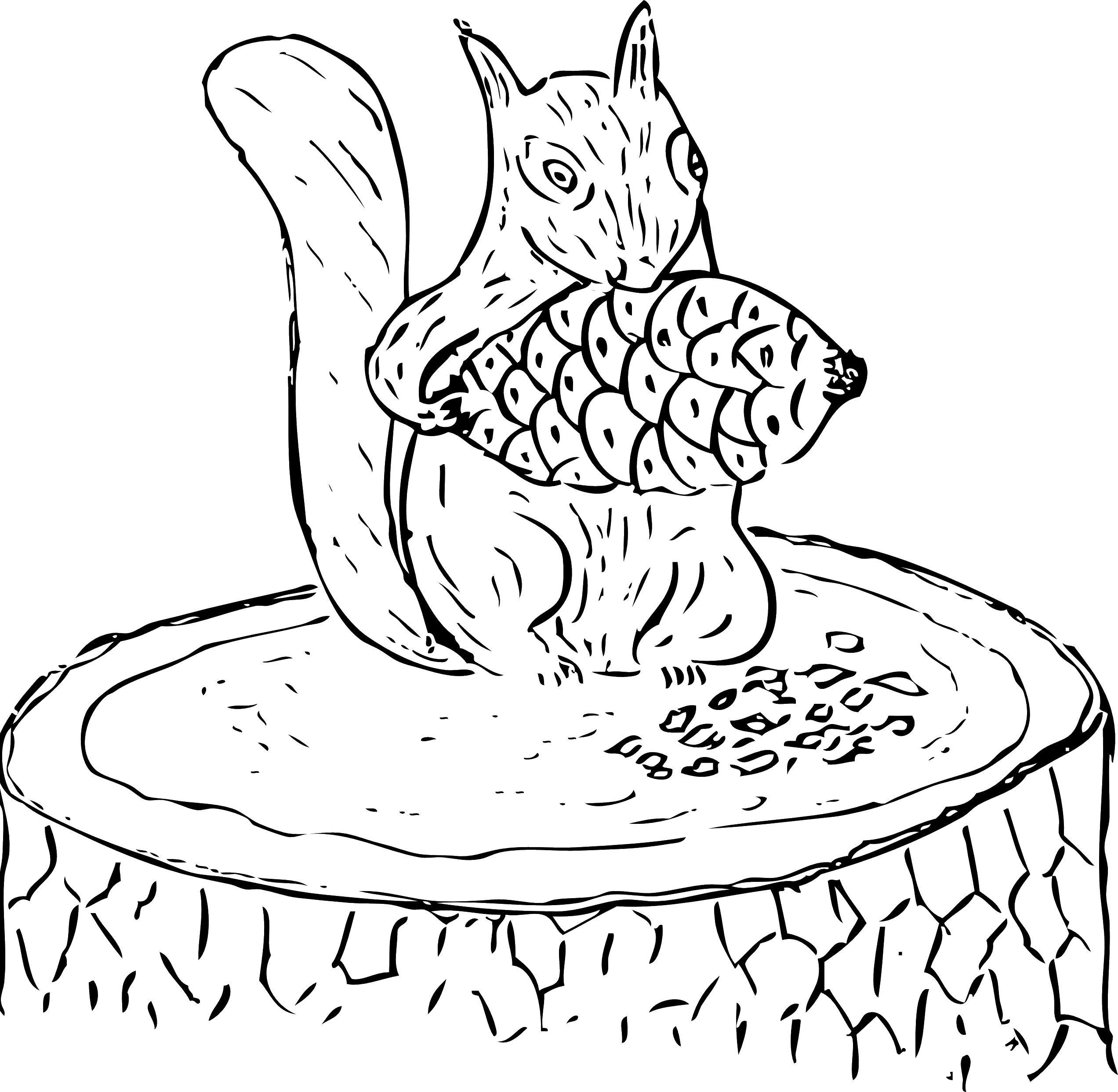 Белочка с шишкой на пеньке Детские раскраски зима распечатать