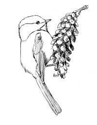 Птичка на шишке Детские раскраски зима распечатать