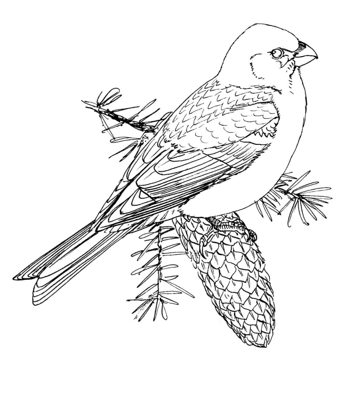 Птица на еловой шишке Раскраска сказочная зима