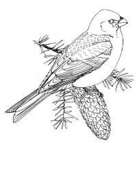 Птица на еловой шишке Зимние раскраски для девочек