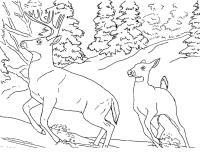 Олени бегают по снегу в лесу Детские раскраски зима распечатать