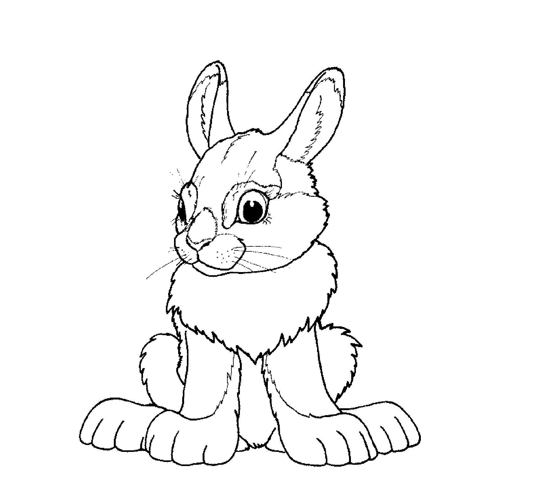 Заяц беляк Раскраска зима распечатать