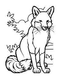 Пушистая лисичка Раскраска зима