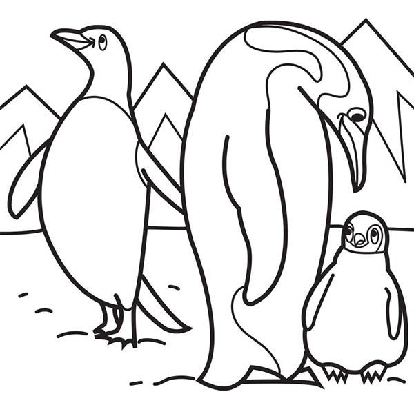 раскраски детские окружающий мир раскраски для детей с пингвинами | 600x600