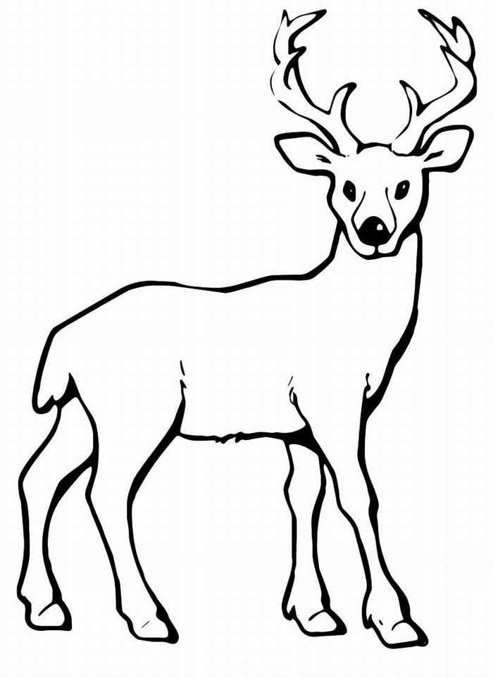 Северный олень для трафарета Зимние раскраски для мальчиков