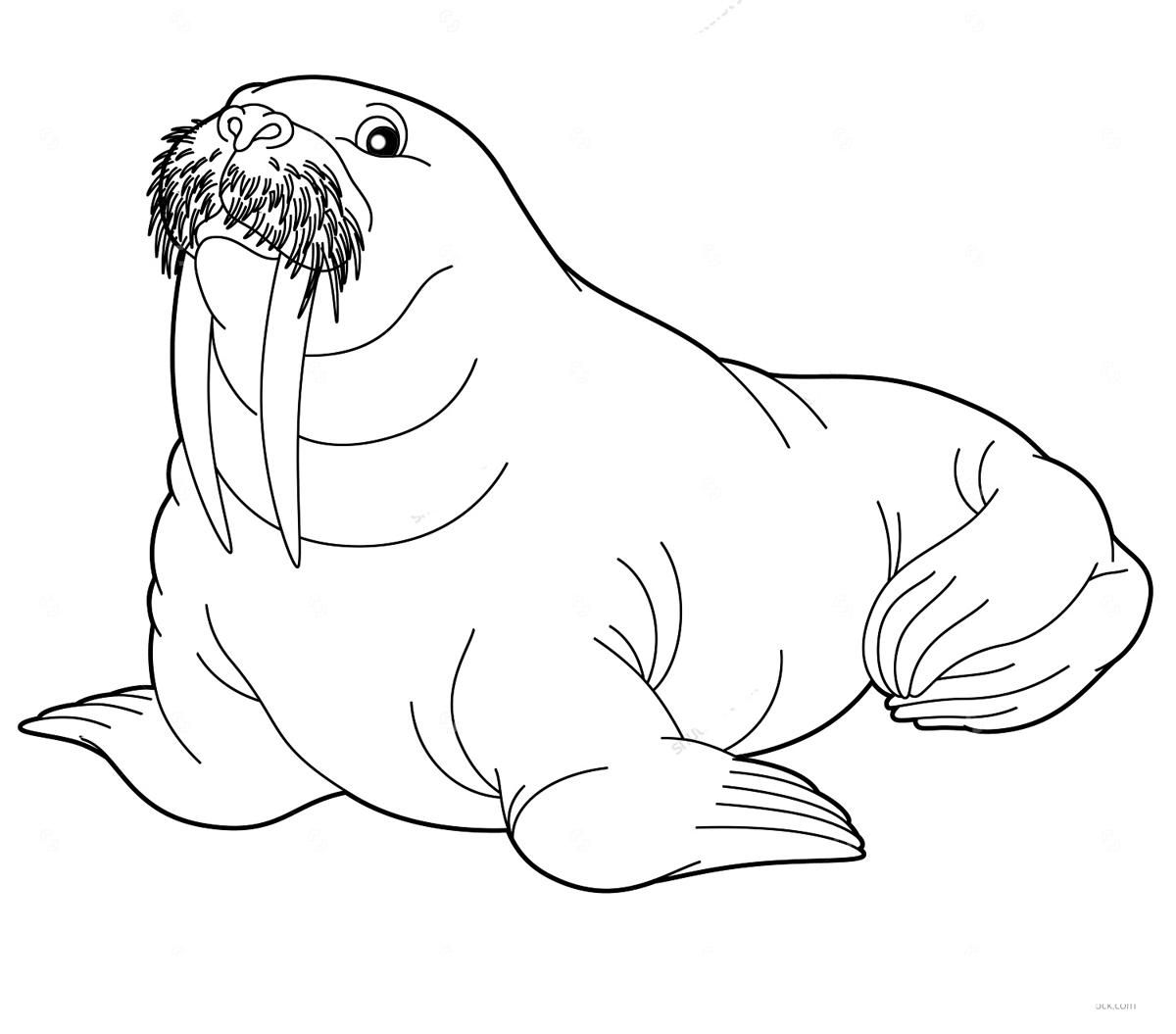 Северный морж Зимние раскраски для малышей