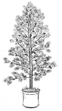 Дерево с шишками в ведре Зимние раскраски для девочек